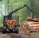 Picture for category Forestry